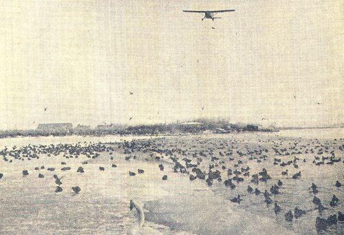 Er werden vliegtuigen ingezet om de uitgehongerde vogels te voeden
